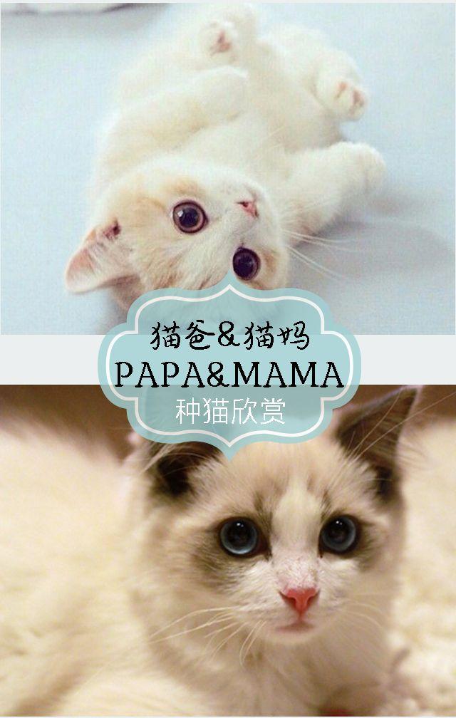 宠物\\\\猫舍\\\\猫咪销售专用