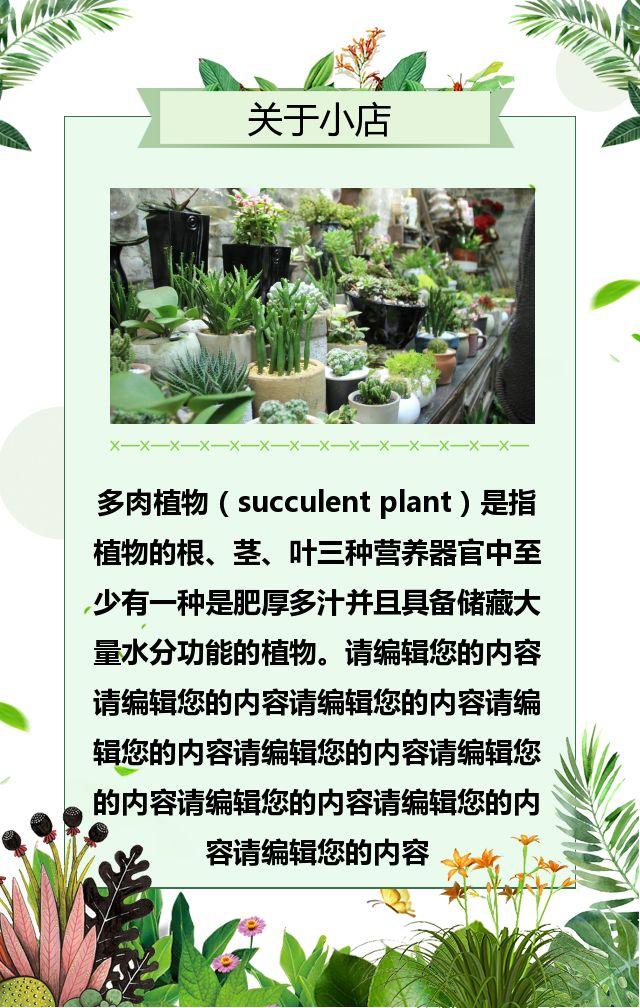 多肉植物/电商微商淘宝推广