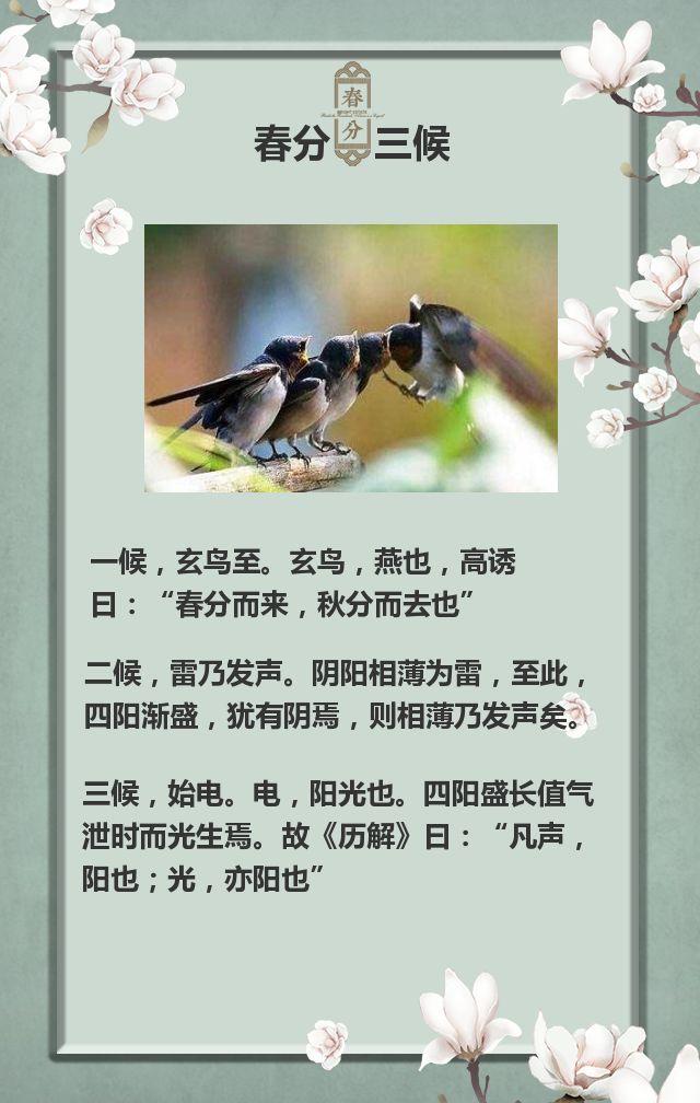 唯美古风春分节气/二十四节气企业宣传推广传统节日