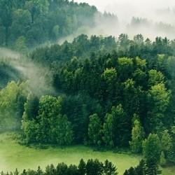 小森林设计