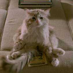 猫咪九条命