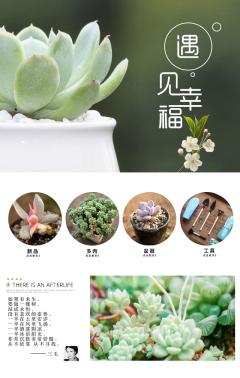 产品展示 产品推广 新品发布 清新多肉植物