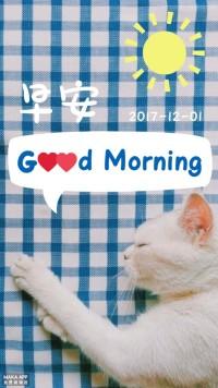可爱温馨白色猫咪摄影早安日签