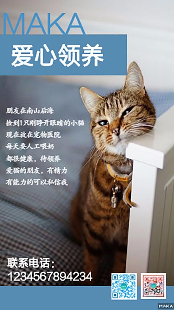 小猫爱心领养