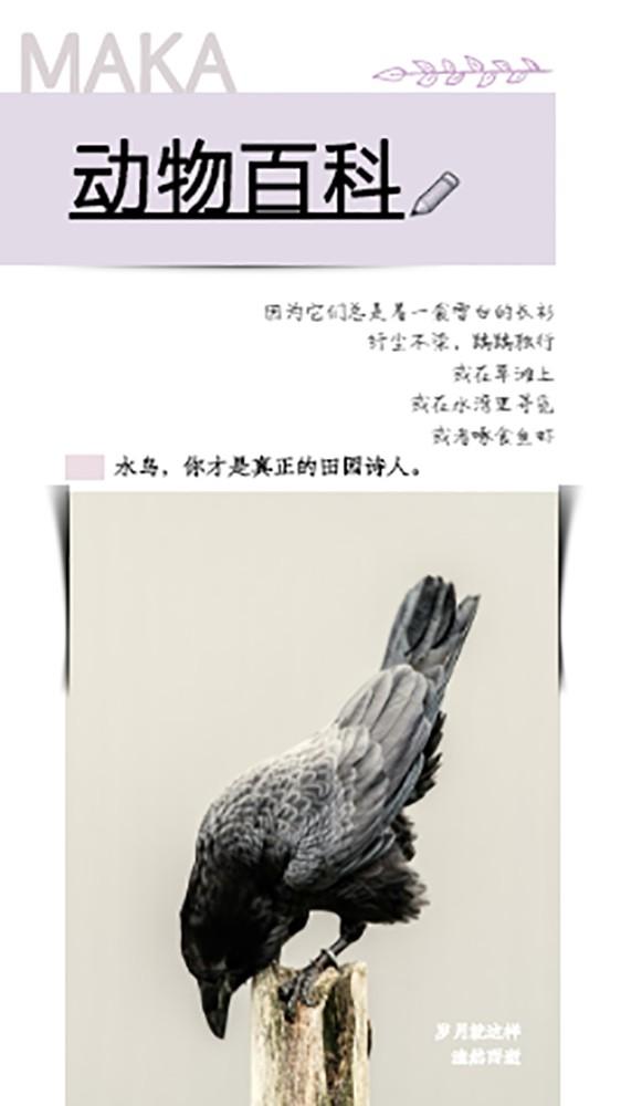 水鸟集动物百科