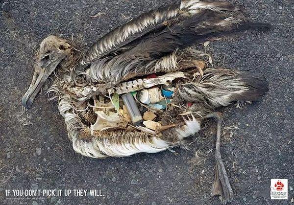 环保公益广告设计案例 现实的残忍与深刻