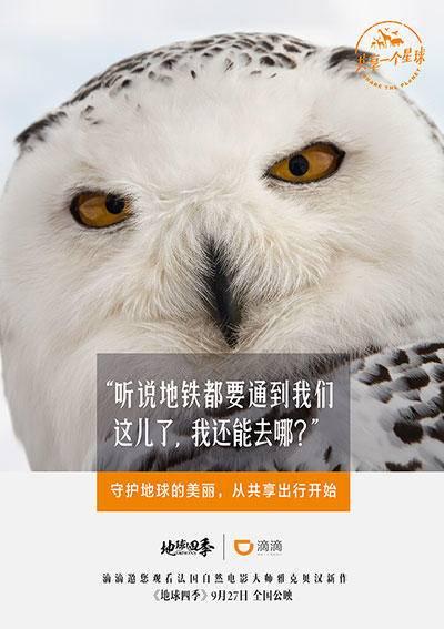 广告海报设计分享 不得不看的优质海报