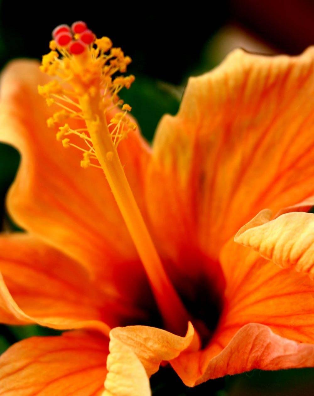 朋友圈封面设计配色分享 橙色的封面简直太美