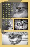 宠物日常记录/宠物相册/铲屎官日记/宠物店推广/宠物聚会
