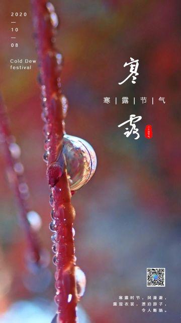 清新自然风寒露节气宣传手机海报