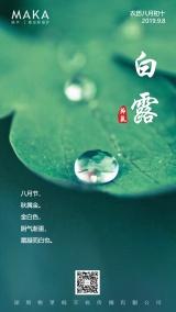 绿色清新自然简约白露二十四节气问候日签宣传海报