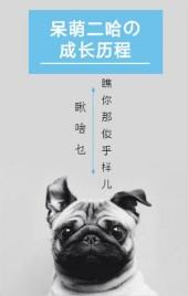 宠物成长相册/文艺可爱宠物成长相册/呆萌相册