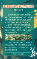 二十四节气芒种节气宣传知识普及H5