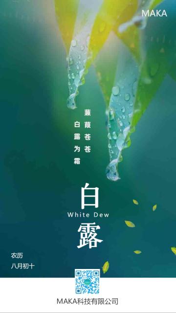 绿色清新自然传统节气白露手机海报模板