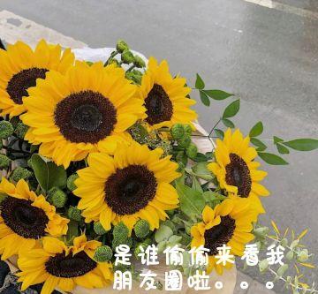 小清新社交微信朋友圈封面配图