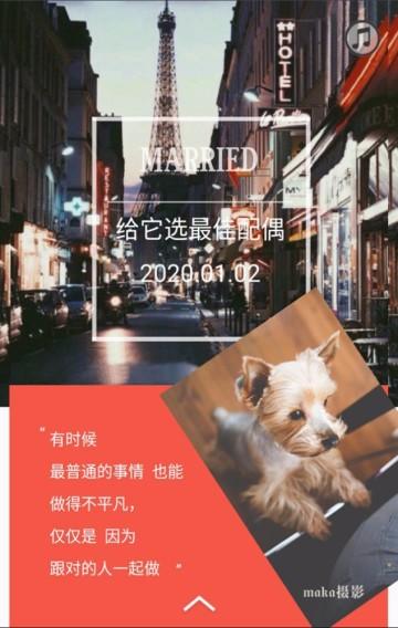 红色时尚宠物生活宠物店特色服务宣传翻页H5