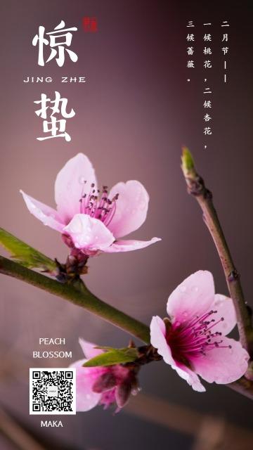 惊蛰粉色桃花大气简约企业节气海报