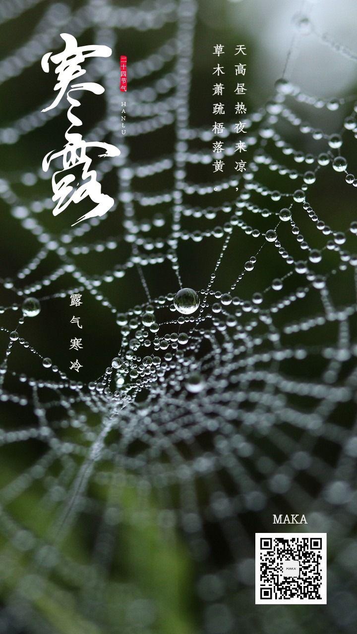 寒露二十四节气水珠露水蛛网