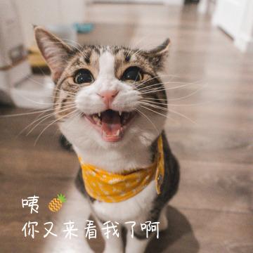 可爱猫咪喵喵通用微信朋友圈封面