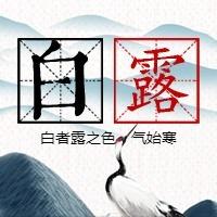 简约文艺传统二十四节气白露微信公众号小图