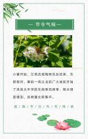 绿色中国风小暑节气宣传h5