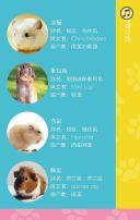 宠物店/宠物医院/宠物介绍