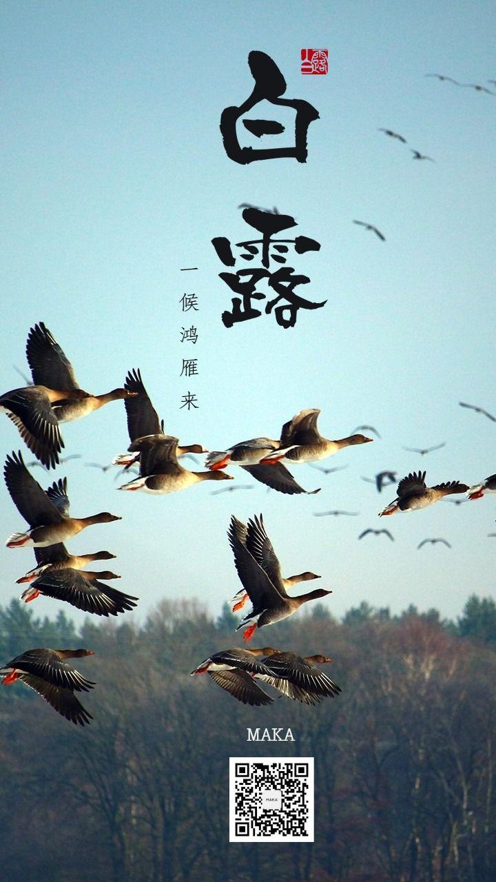 白露群鸟最秋天白露三候