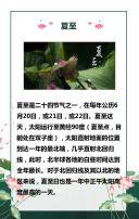 夏至节气企业宣传科普品牌推广