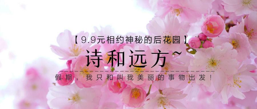春季旅行踏青樱花花海宣传