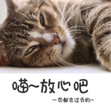猫咪温馨放松小清新宣传头像