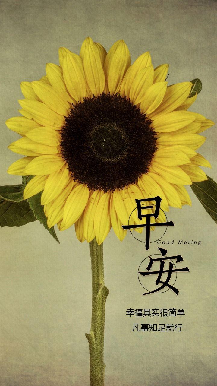 花朵背景早安问候早晚安心情寄语