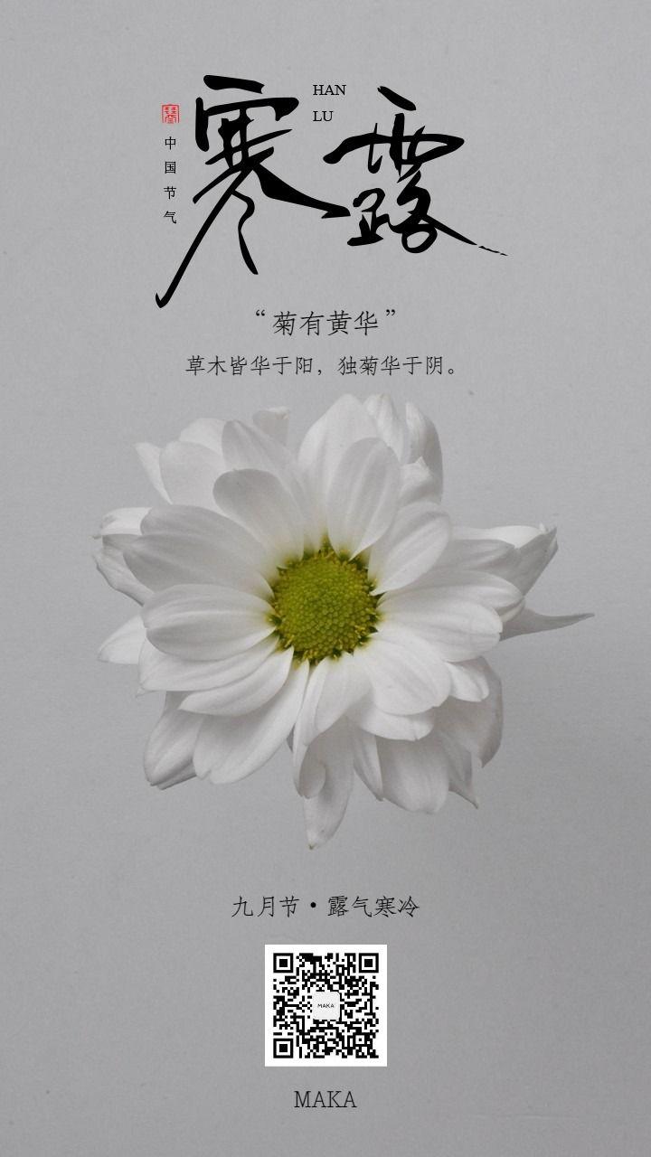 寒露白色菊花简约中式节气