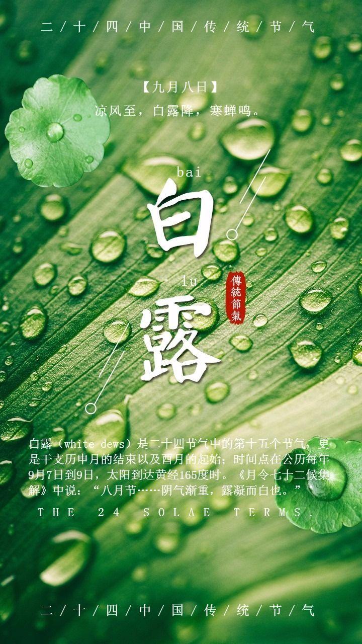 中国二十四节气之白露宣传海报