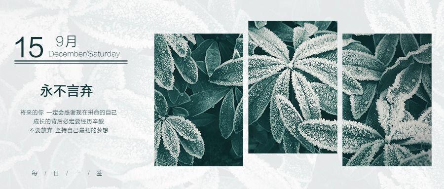 创意几何矩形简约小清新绿色植物多肉励志日签永不言弃日历日签微信公众封面大图
