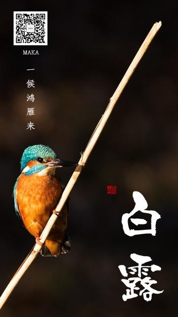 黄色点缀简约中国风白露节气宣传手机海报