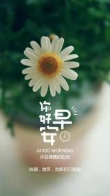 花朵背景早安问候早安祝福