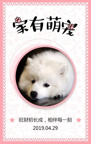 精美粉色宠物相册/宠物成长日记H5模板