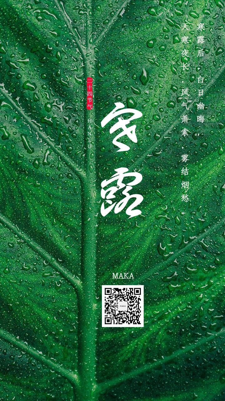 寒露节九月节绿色叶子露水水珠海报