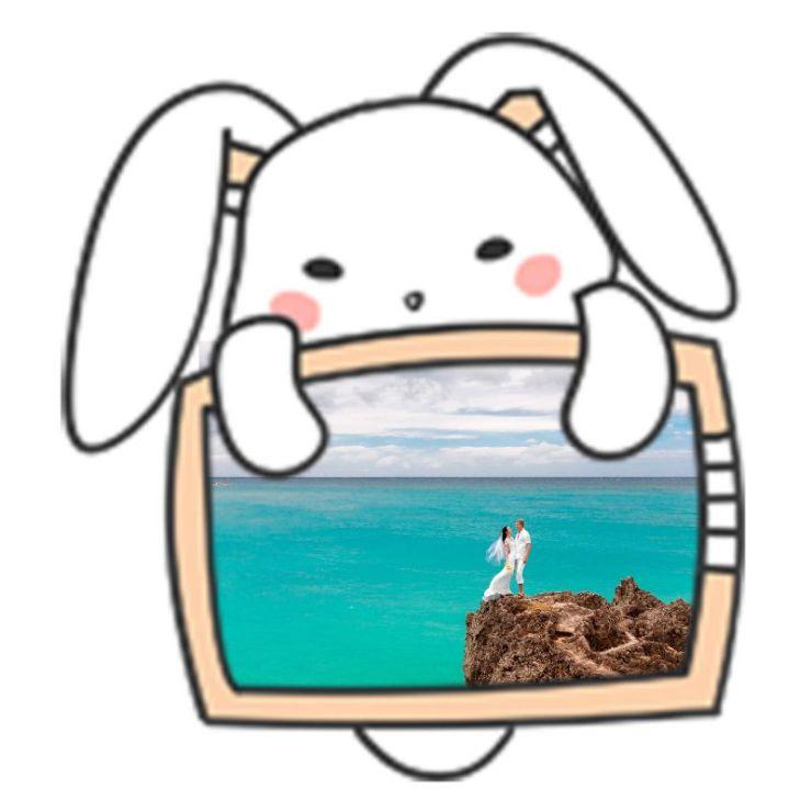 卡通动物猫小白兔社交头像
