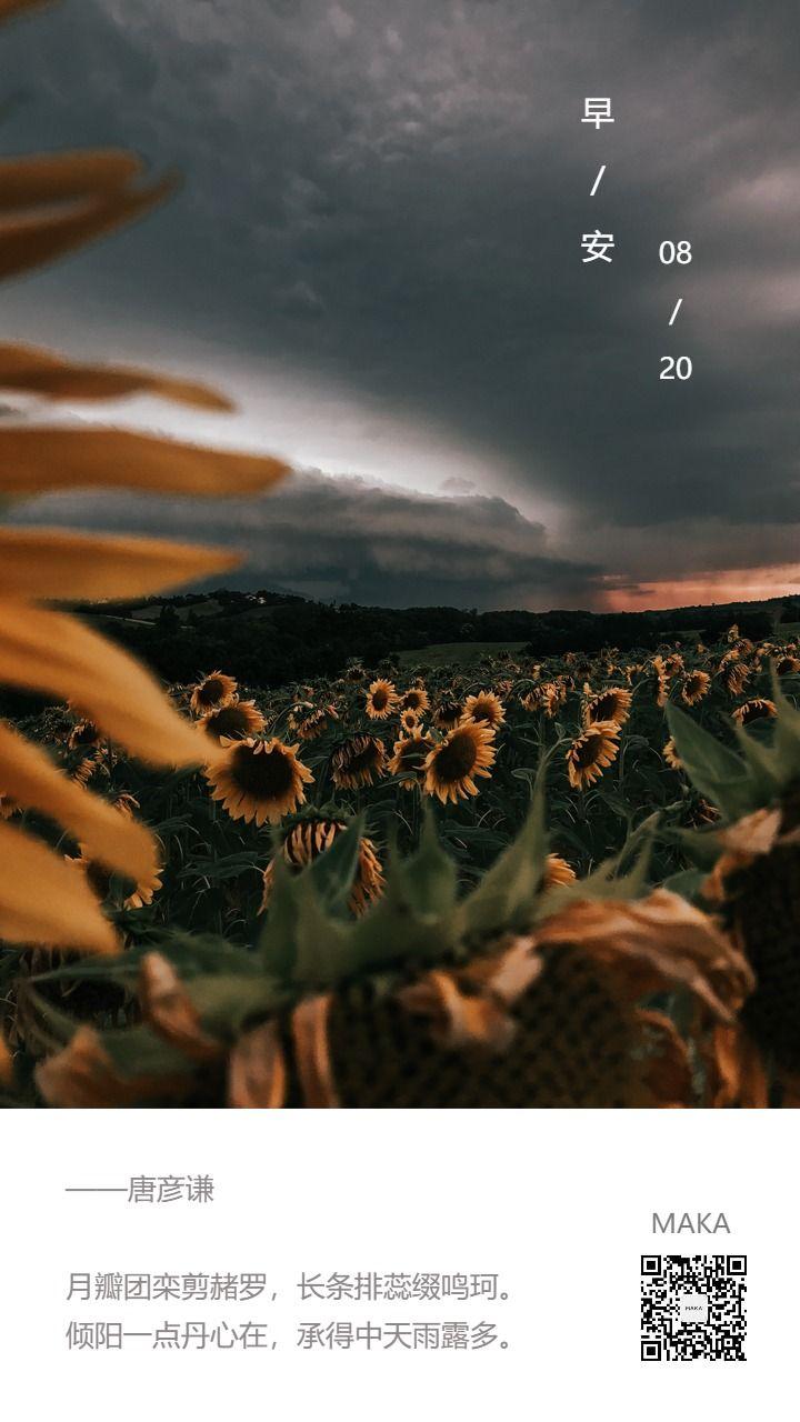 日签早安心情语录向日葵向日向日