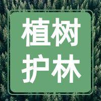 绿色简约植树护林公众号小图
