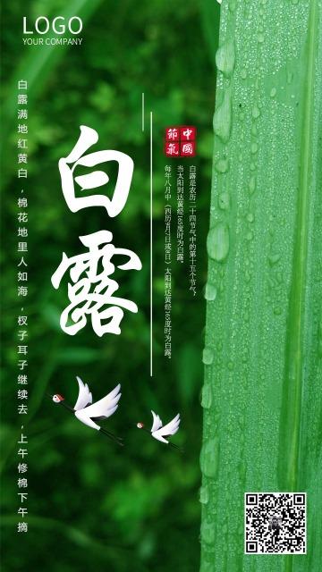 绿色清新白露节气企业宣传海报