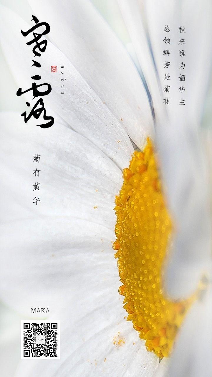 寒露节九月节白色海报菊花绽放