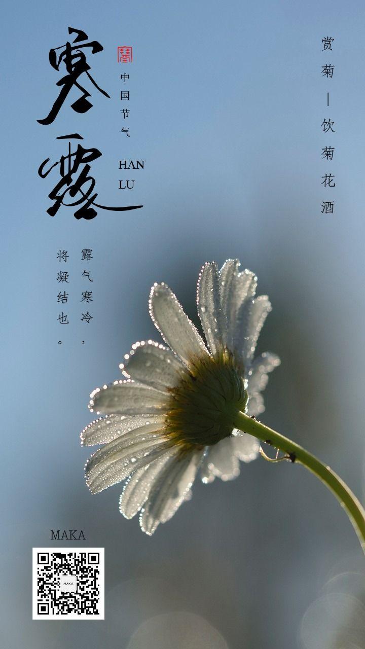 寒露二十四节气蓝色海报菊花