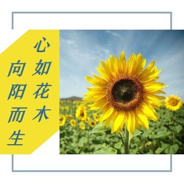 向日葵阳光积极向上黄色文艺小清新微信朋友圈背景封面