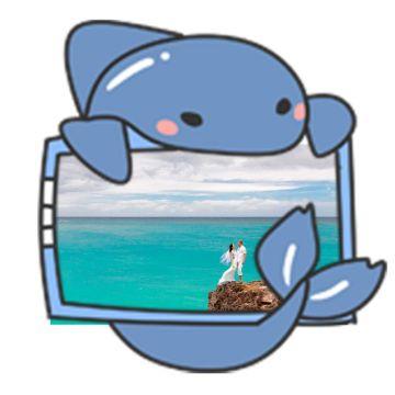 卡通动物猫小海豚社交头像