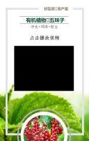 绿色高端农业转型好项目五味子介绍推广讲解