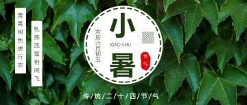 文艺清新风小暑节气宣传通用微信公众号封面