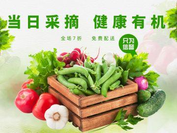 当日采摘新鲜蔬菜海报