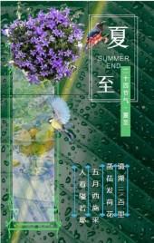 夏至/心情日签/企业文化宣传